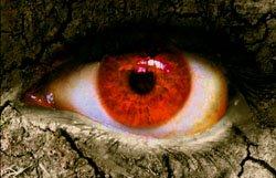 mauvais-oeil-sorcellerie